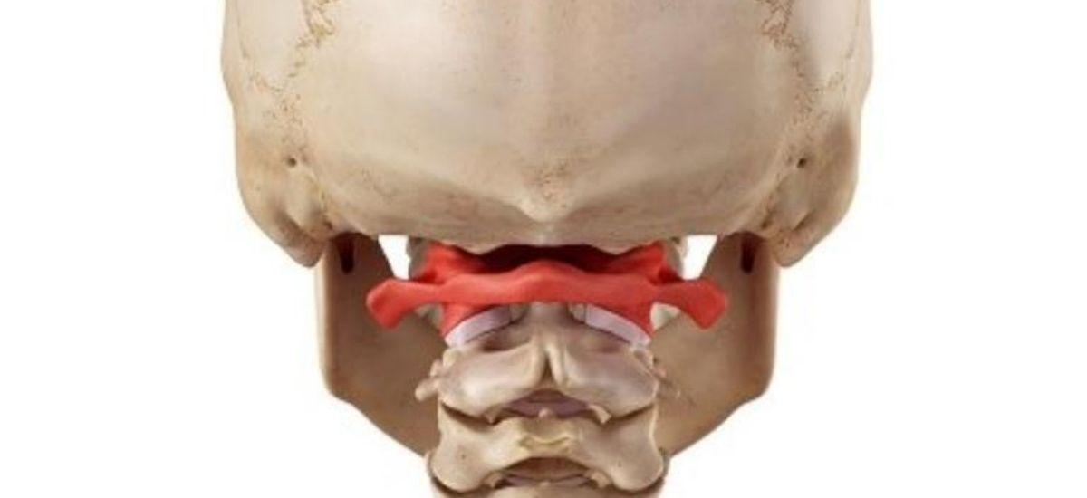 prima vertebra cervicale-benessere-salute-rigenera life