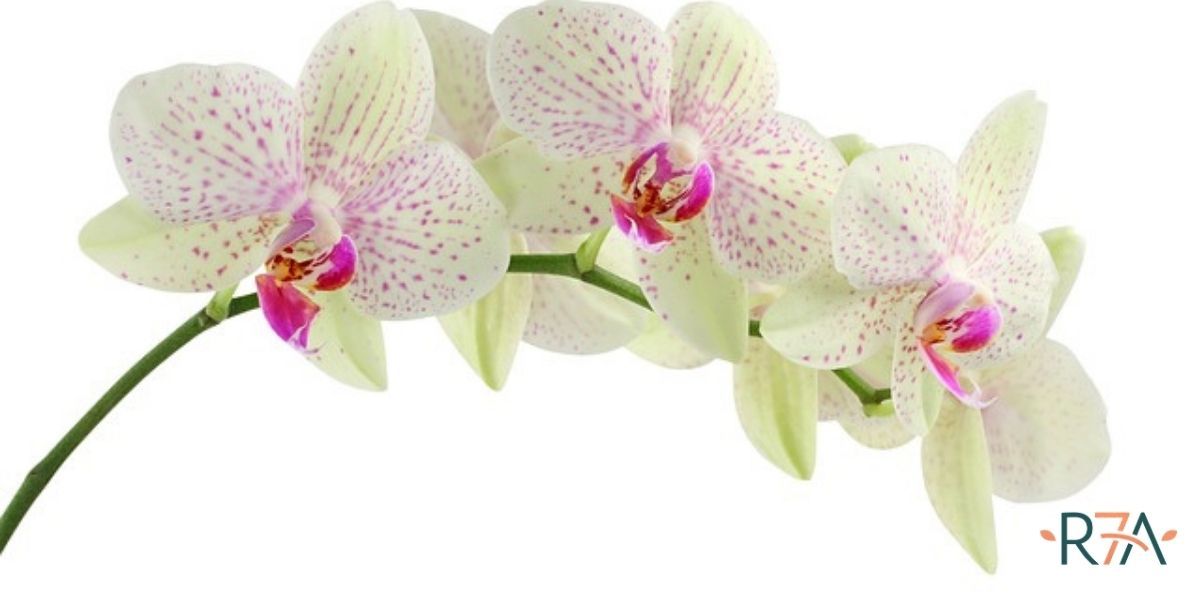 Le orchidee-salute-benessere-rigenera-life-blog