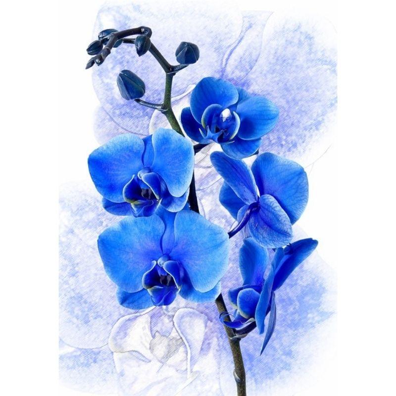 Le orchidee-salute-benessere-rigenera-life